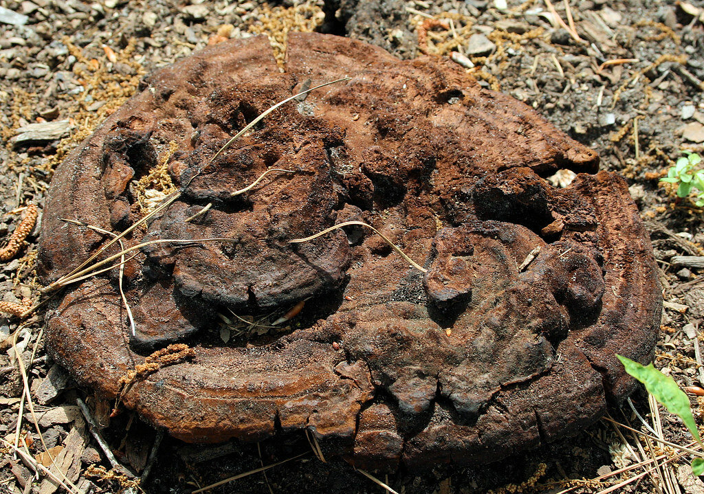 Further Musings on Dung