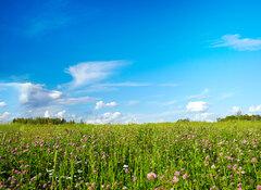 Field with meadow flowers