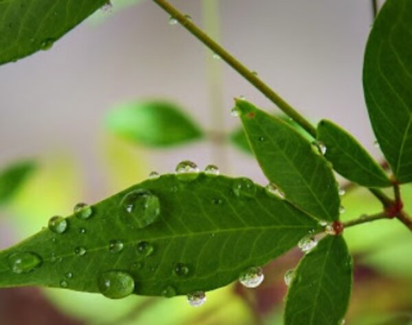 """Early and Latter Rain"" - Notes on James 5:7-12"
