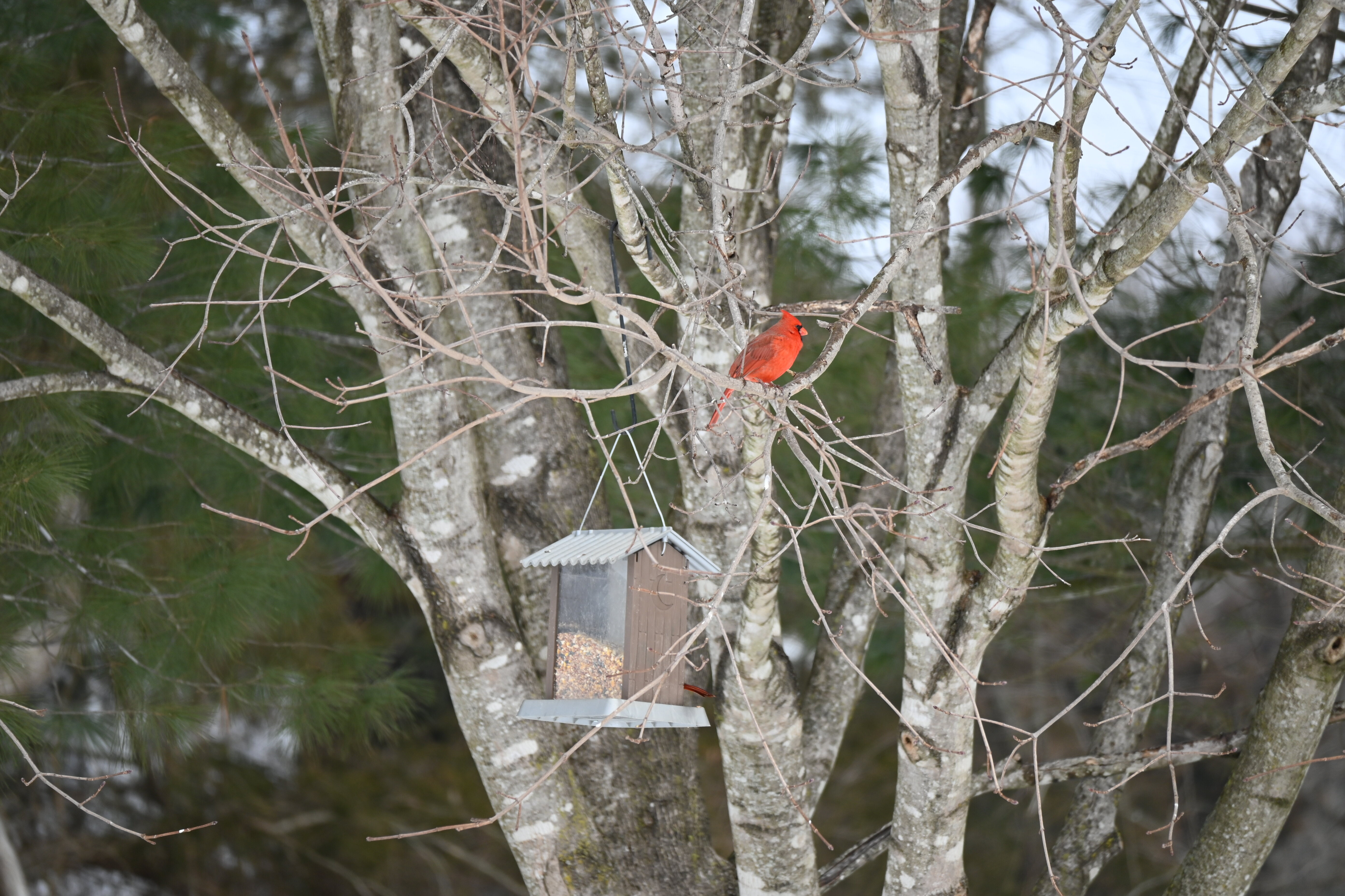 Meditation: Perched on a Tree
