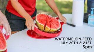 Watermelon Feed 2021