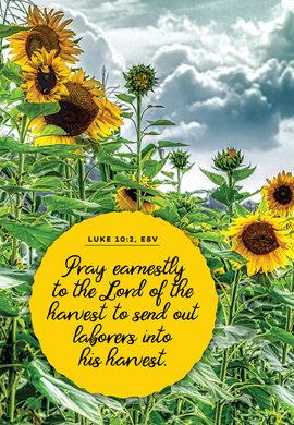 Pray Earnestly Sunflowers Luke 10 2