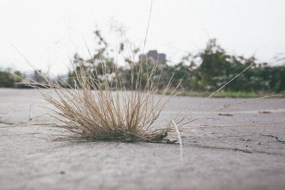 Dry grass in concrete