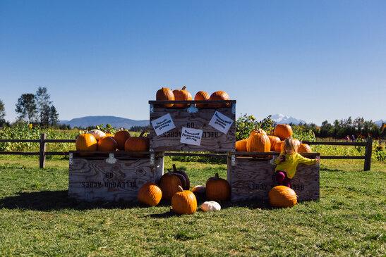 Pumpkin patch sale in October.