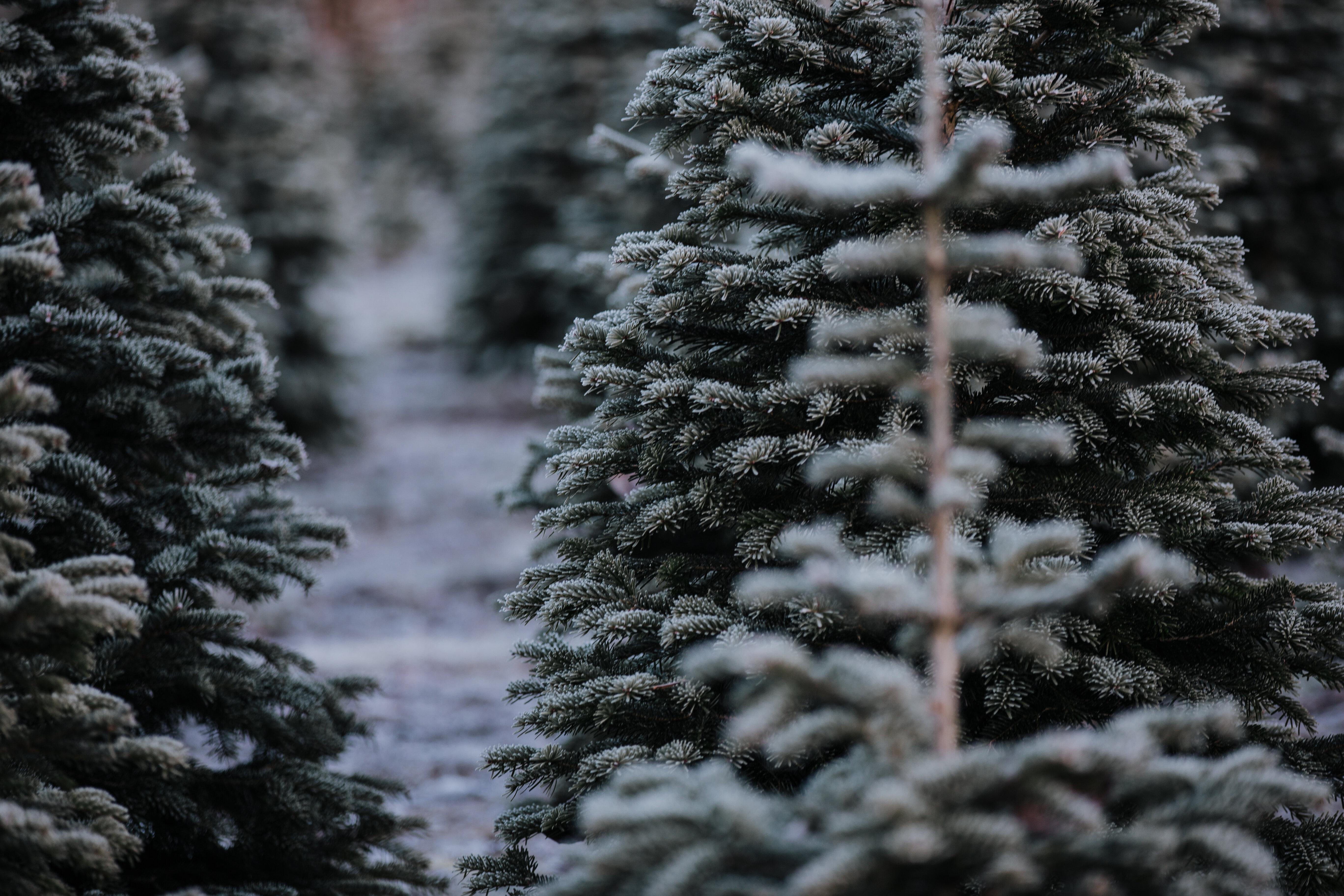 Christmas Journey Through Luke's Gospel