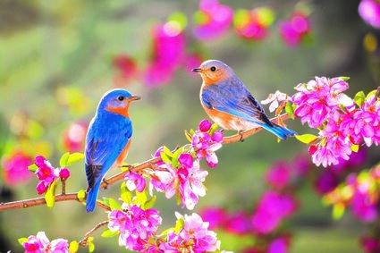 Birdssprings