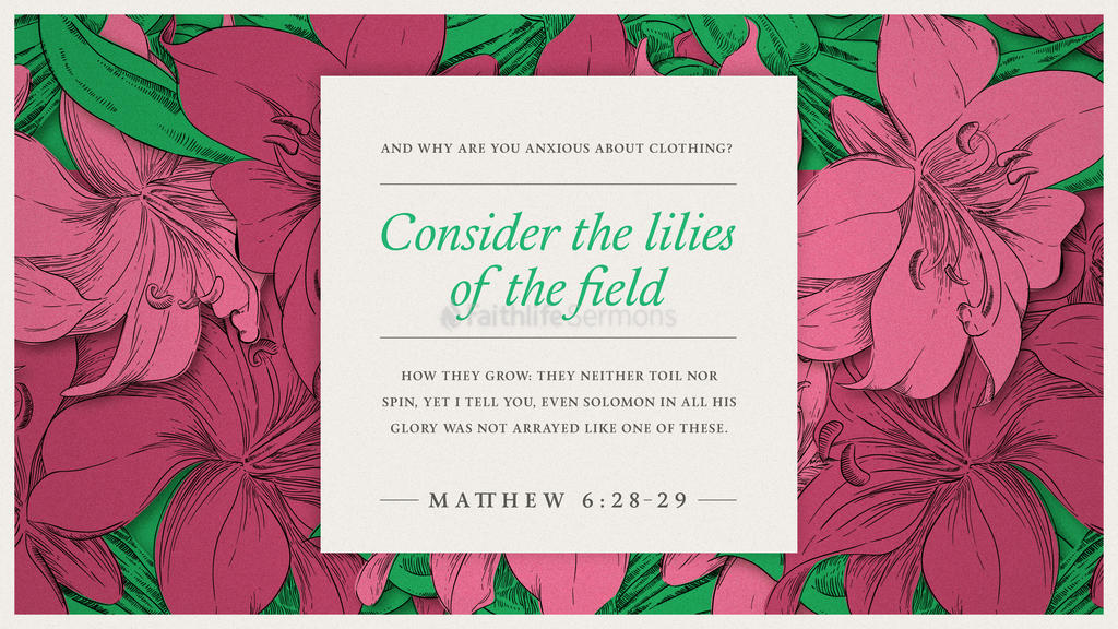 Matthew 6:28–29 large preview