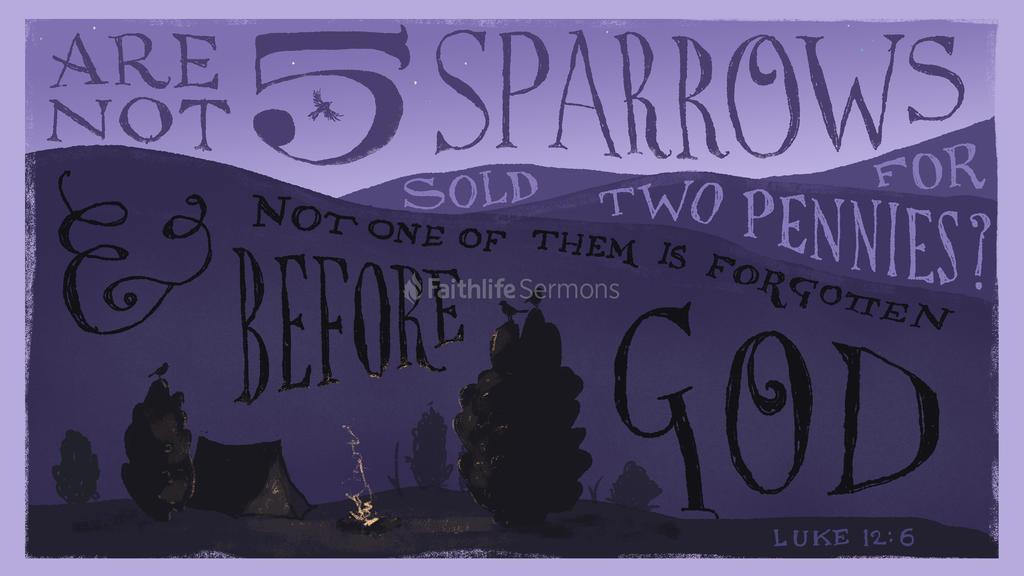 Sparrow3 preview