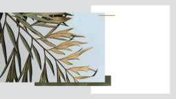 Palm Sunday Hosanna have a great week! 16x9 PowerPoint Photoshop image