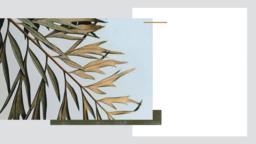 Palm Sunday Hosanna ¡tengan una excelente semana! 16x9 PowerPoint Photoshop image