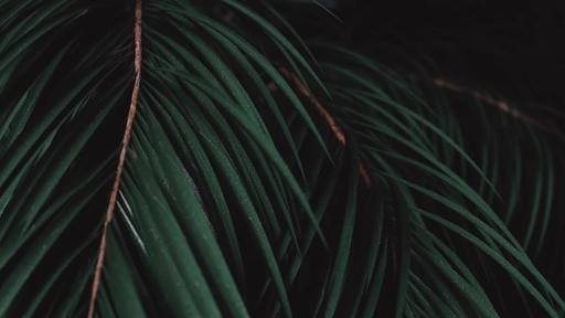Palm Sunday Branches - Content - Motion