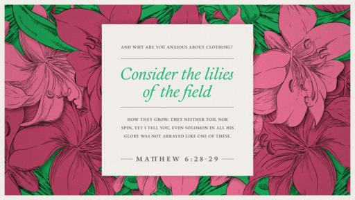 Matthew 6:28–29 verse of the day image
