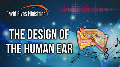 The Design Of The Human Ear