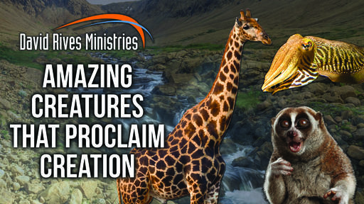 Amazing Creatures That Proclaim Creation