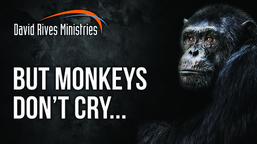 But Monkeys Don't Cry