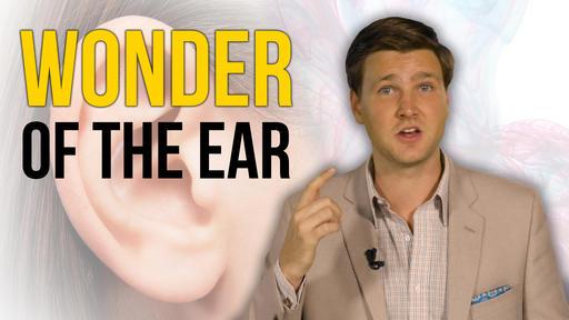 Wonder Of The Ear
