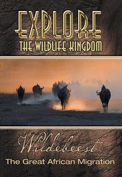 Wildebeests - The Great Migration