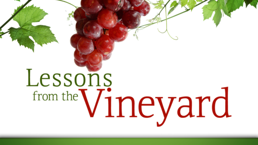 Lessons From The Vineyard