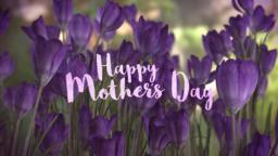 Purple Crocus  PowerPoint Photoshop image 1
