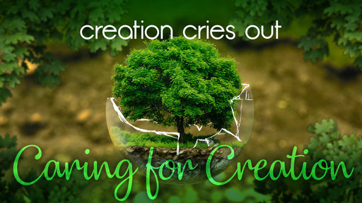 Creation Cries Out
