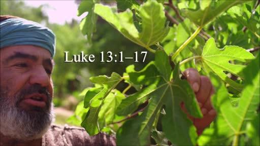 Luke 13:1-17