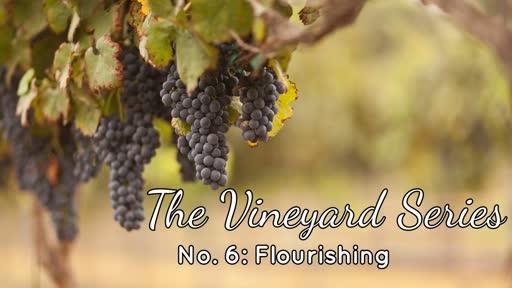 The Vineyard Series No. 6