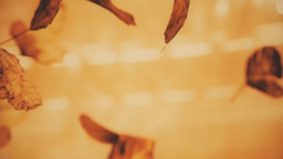 Autumn Leaves header subheader 16x9 PowerPoint Photoshop image