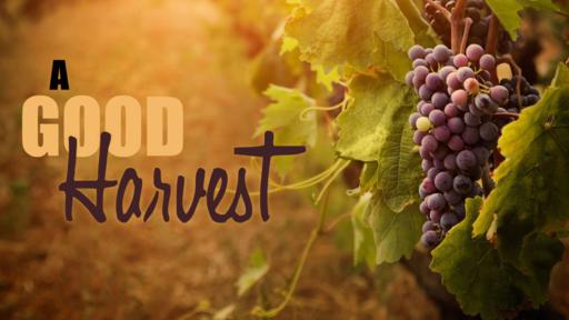 A Good Harvest Wrap-Up