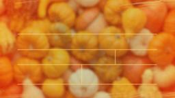 Pumpkin Patch Fundraiser content a PowerPoint image