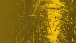 Corn Maze 16x9 PowerPoint image