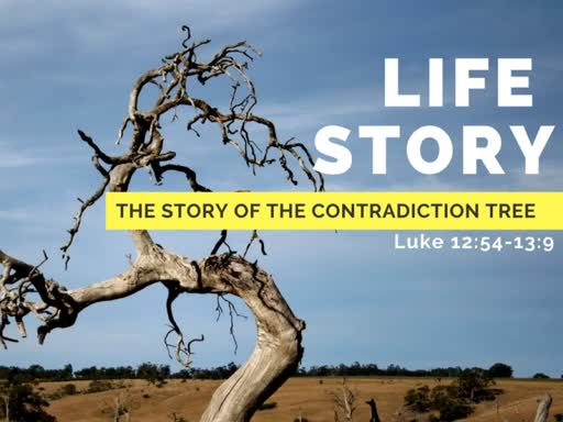 The Story of  the Contradiction Tree