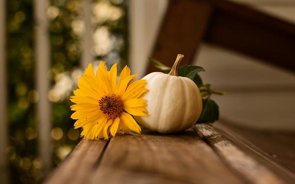 Thanksgiving & Christian Discipleship