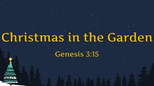 Christmas in the Garden - 12.09.18 AM