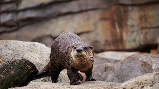 Stick together - like otters