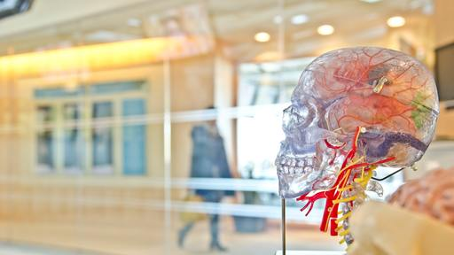 New smart phone app can perform a brain scan