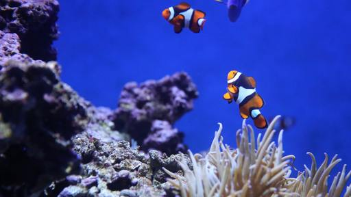 """Finding Nemo"" movie: Dad was just trying to protect his son"