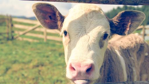 """Are Christians willing to """"tip"""" their sacred cows?"""