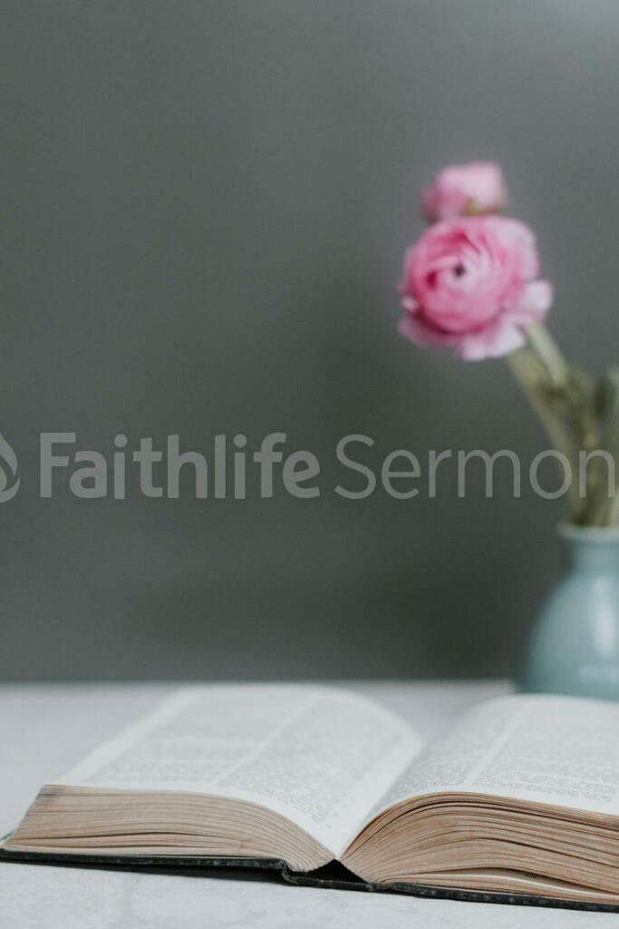Flowers on Bible pink roses with 16x9 c48a3111 0409 4f0c 8f5d 0ba0c5de9972 preview