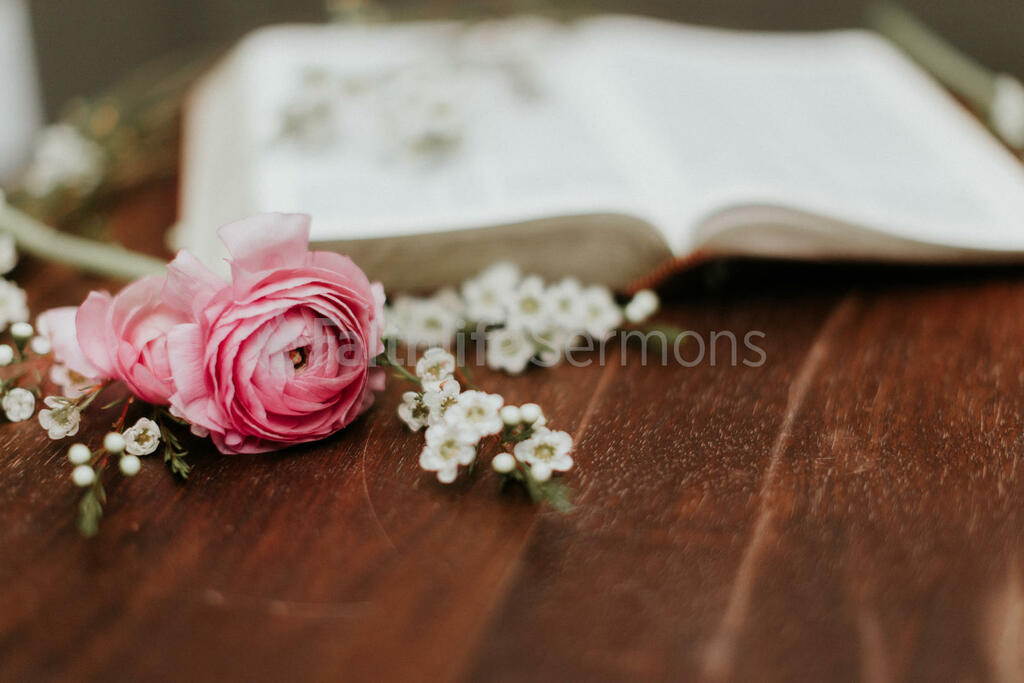 Flowers on Bible pink roses and white wax with open 16x9 8101091d 4da4 419f b152 ea84cb5ce343 preview