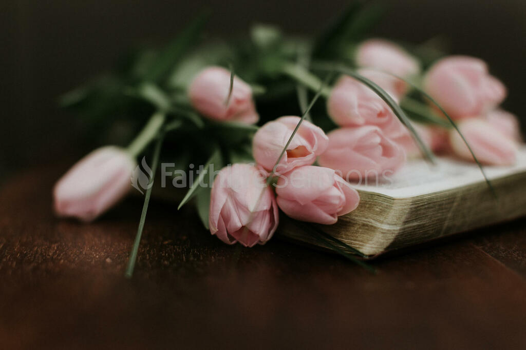 Flowers on Bible light pink tulips open 16x9 1794cd30 9bc7 42be 9992 806774380358 preview