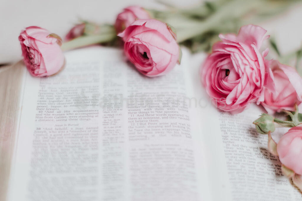 Flowers on Bible pink roses open 16x9 75203932 be92 40f6 945f 281c64656ce8 preview