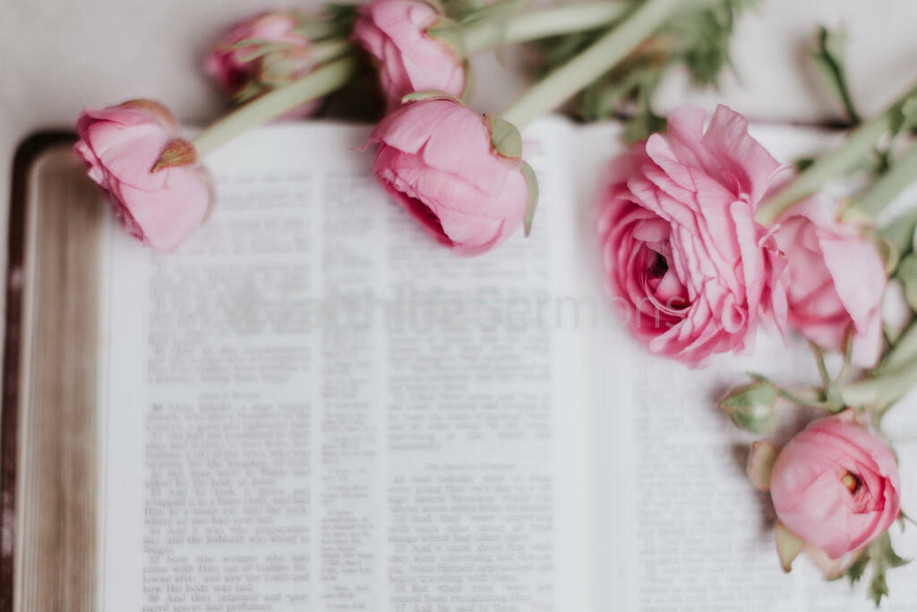 Flowers on Bible pink roses open 16x9 da346ee7 27ab 43cc 999e 4873007849a0 preview