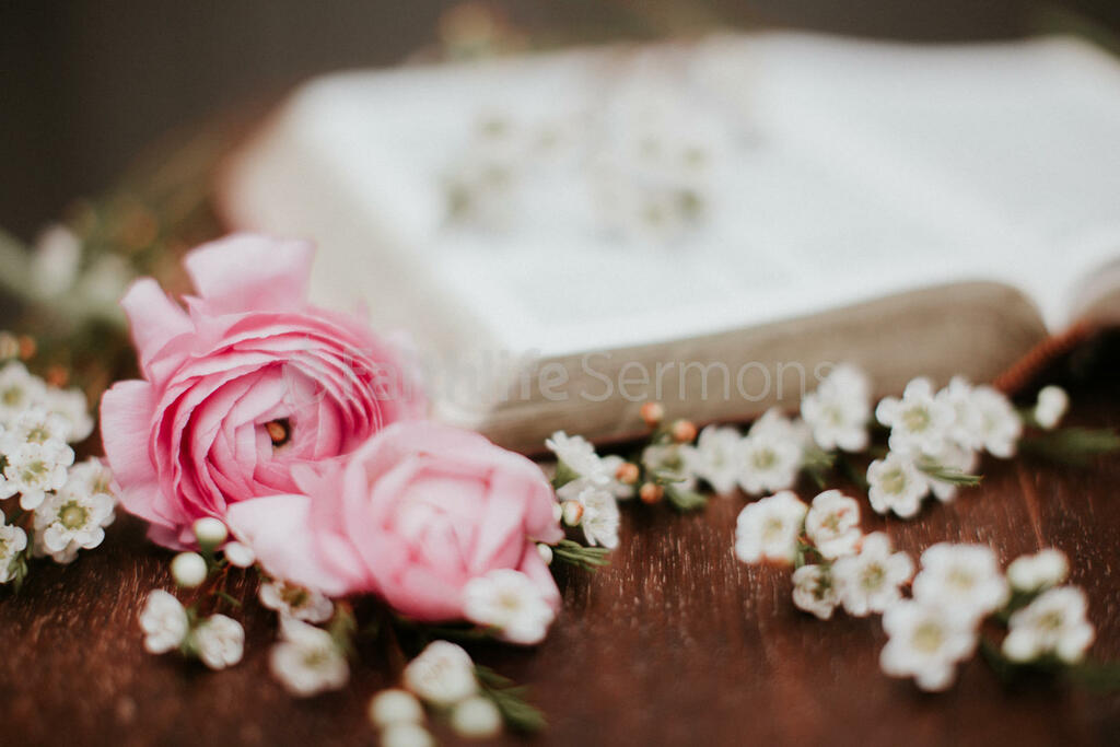 Flowers on Bible pink roses and white wax with open 16x9 eb045ef7 caad 4726 971e 5409a54d4c30 preview