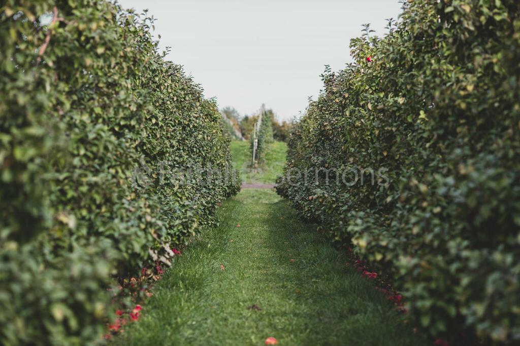 Fall 2018 apple orchard 16x9 d73256b2 1e90 4923 84e1 bd35479361fc preview