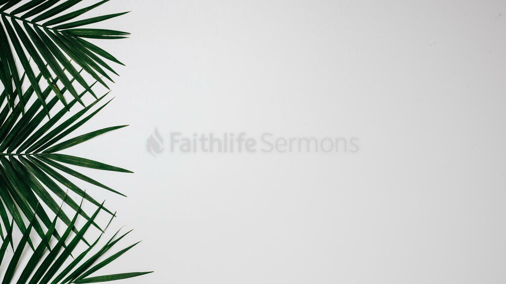 Palm Branches 16x9 6eb7cb0d 97e9 474d bff2 f16328a60af2 preview