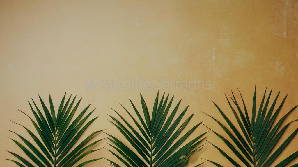 Palm Branches 16x9 8bd50d40 b384 47a5 869d f4f50971cb57 preview