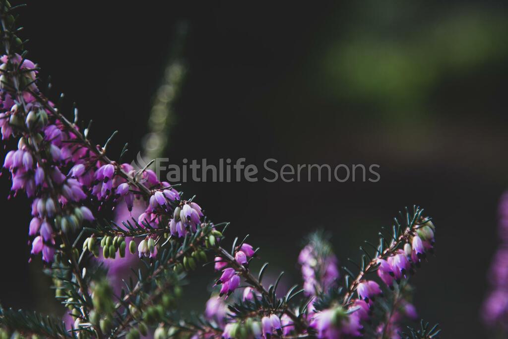 Good Friday purple flowers 16x9 8ad7bfa6 e25f 4a61 a3c9 dcee0c6e9db8 preview