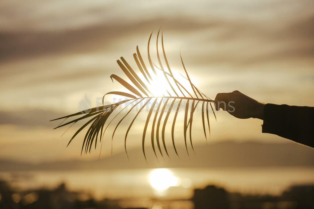Communion and Palm Branches branch being held in front of the sunlight 16x9 60d75b82 b4b4 4159 9891 756f762eaa15 preview