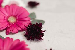 Flowers  image 3
