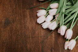 Flowers light pink tulips on brown wooden table 16x9 db799a74 caa2 468c 81e7 2df7356004ec PowerPoint image